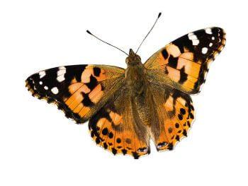 Fini les pannes sèches ? Comment construire un abreuvoir au jardin - La Salamandre papillon