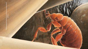 La puce du hérisson bien à l'abri entre les piques du mammifère.