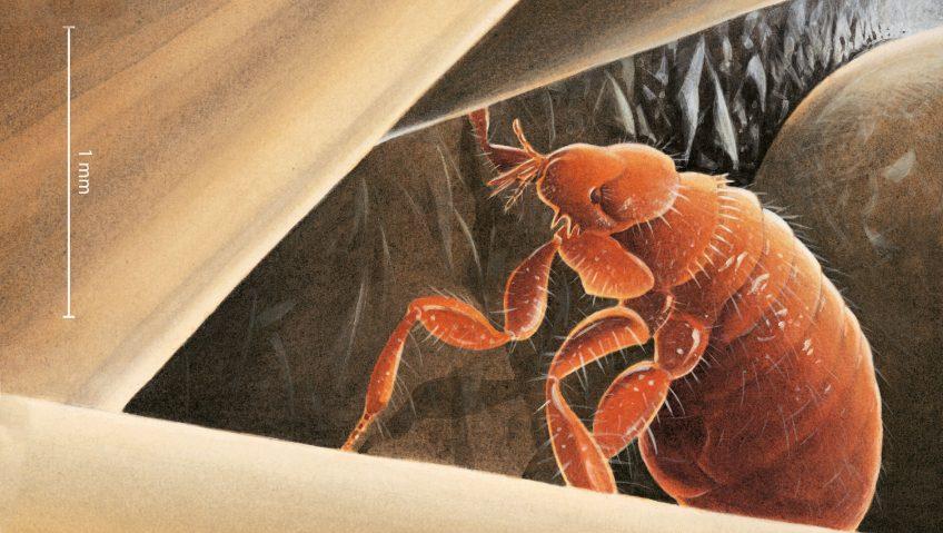 Le hérisson, un vrai sac à puces - La Salamandre