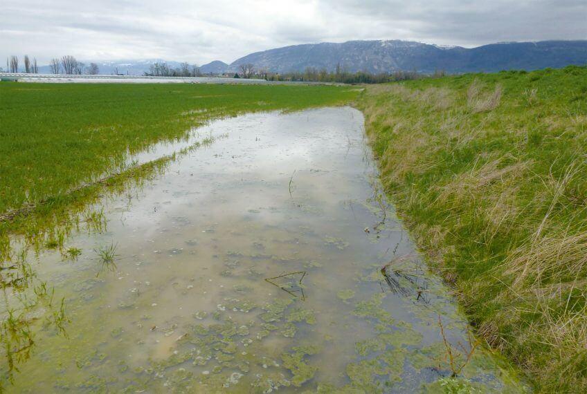 Des gouilles pour sauver le crapaud calamite - La Salamandre canal lully