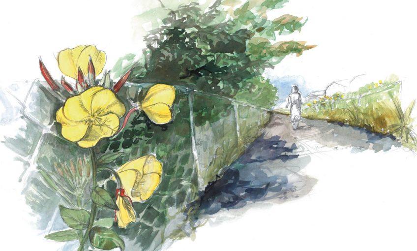 Rencard avec la belle de nuit, l'onagre - La Salamandre dessin