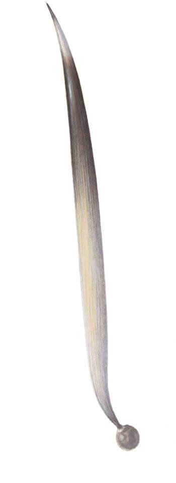 Coup de boule de hérisson - La Salamandre