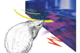 L'univers sensoriel du hérisson est dominé par l'ouïe et surtout par l'odorat.  / © Laurent Willenegger