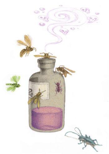 Stop aux piégeages printaniers des frelons asiatiques - La Salamandre dessin