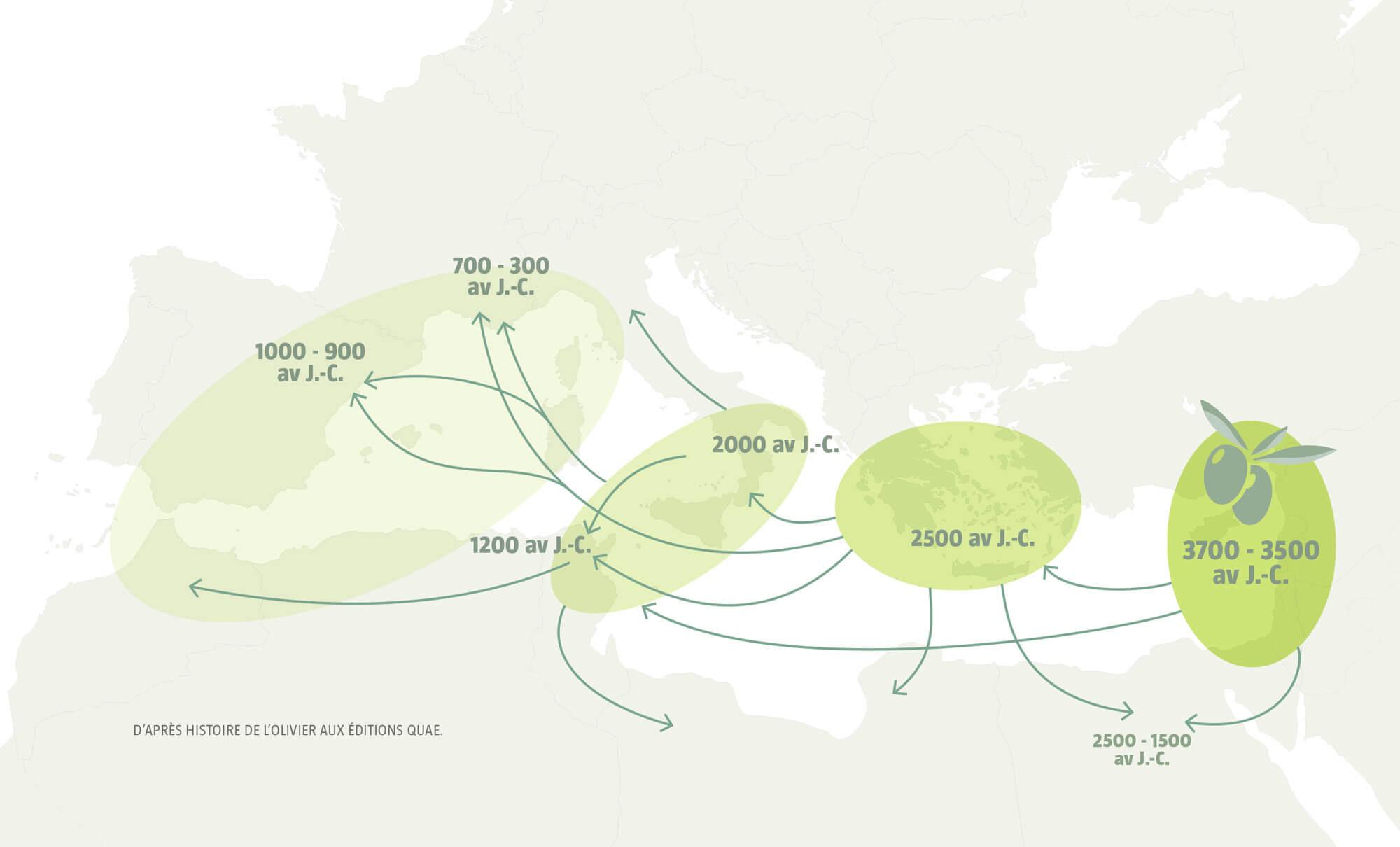 Des racines au Levant, ou les origines des oliviers - La Salamandre carte