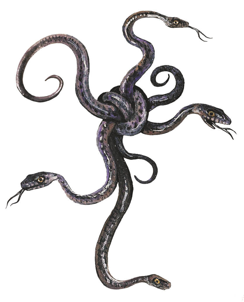 5 vérités sur les mythes autour des serpents - La Salamandre