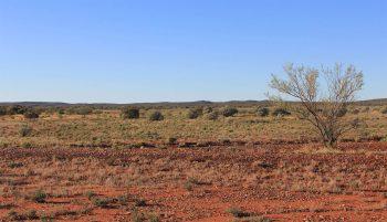 Une immense clôture entourera une aire refuge dans le désertique outback australien.