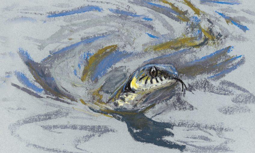 Rencontre au bord de l'eau avec la couleuvre - La Salamandre dessin rivière