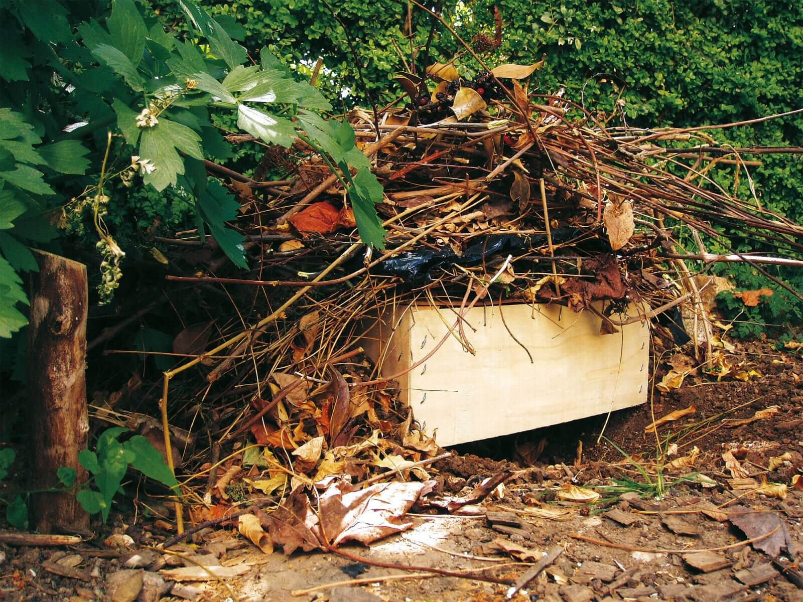 r¨gles d or pour un jardin  hérisson La Salamandre
