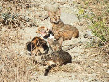 Immense clôture contre les chats en Australie - La Salamandre