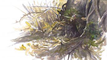 Le hérisson hiberne dans son nid…