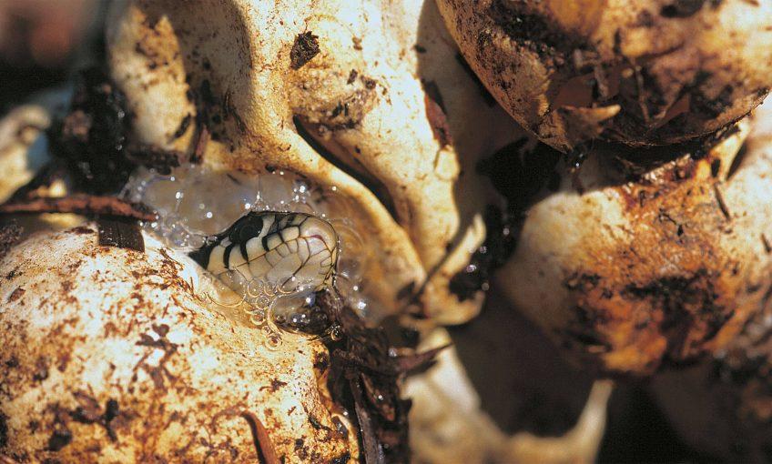 Maternité de campagne pour la couleuvre - La Salamandre