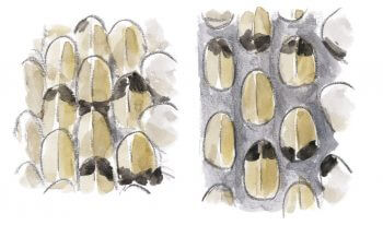 Anatomie de la couleuvre à collier - La Salamandre dessin écaille