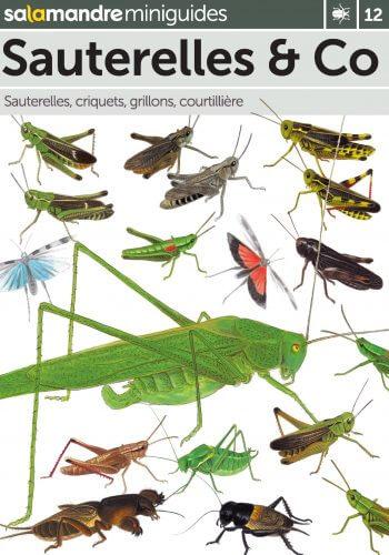 Miniguide 12 : Sauterelles & Co