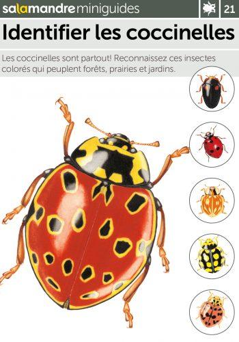 Miniguide 21 : Identifier les coccinelles