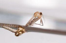 8 - Miracle! Le fourreau se déchire et l'insecte parfait émerge à la surface de l'eau. / © Gilbert Hayoz