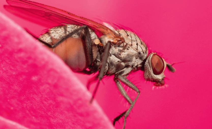 La Salamandre n° 241 Pourquoi la mouche