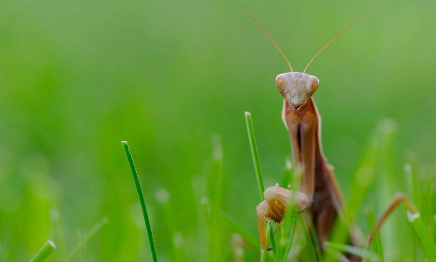mort de peur la salamandre mouche drosophile mante religieuse