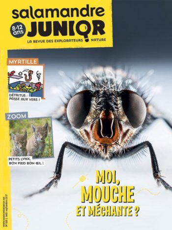 Couverture de La Salamandre Junior n°113