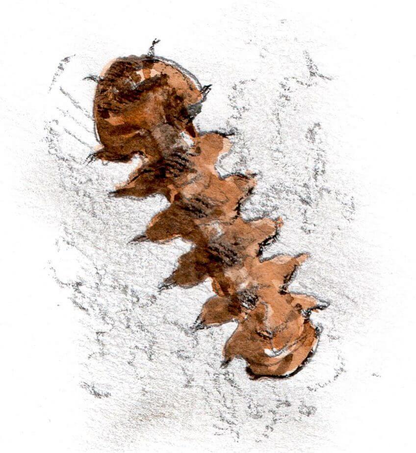 10 mouches fantastiques - La Salamandre