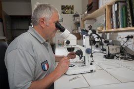 Bruno Tissot examine les syrphes à la loupe. / © Olivier Born