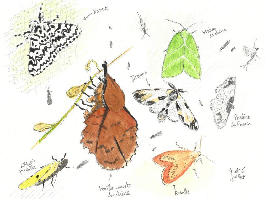 Le monde des papillons de nuit - La Salamandre