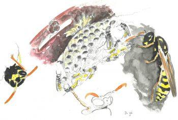 dessin-#26-guêpes