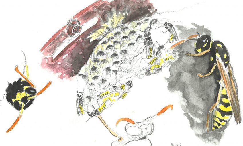 Guêpes satanées voisines de table - La Salamandre