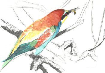 dessin-#27-guêpier