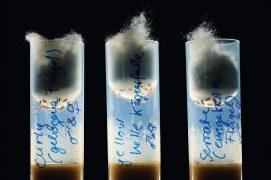 Eprouvettes contenant des drosophiles / © Solvin Zankl