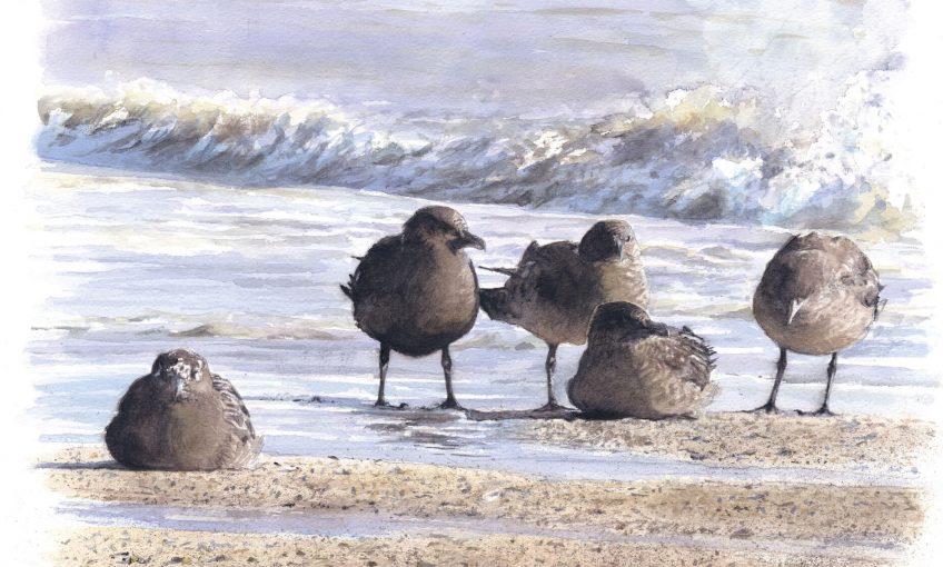 Peintures d'un temps dans la baie - La Salamandre