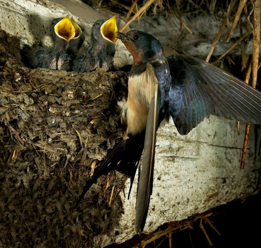 Les mouches, un club qui pèse lourd - La Salamandre