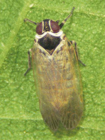 Résidents permanents et occasionnels de l'ortie - La Salamandre