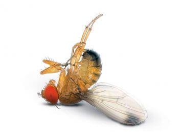 La guerre des diptères - La Salamandre
