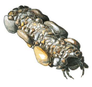 Comment bricoler un filtre à eau - La Salamandre
