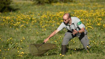 L'entomologiste Jocelyn Claude en pleine action…