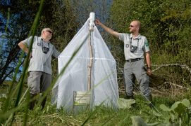 Les entomologistes Bruno Tissot et Jocelyn Claude autour de la tente de capture / © Olivier Born