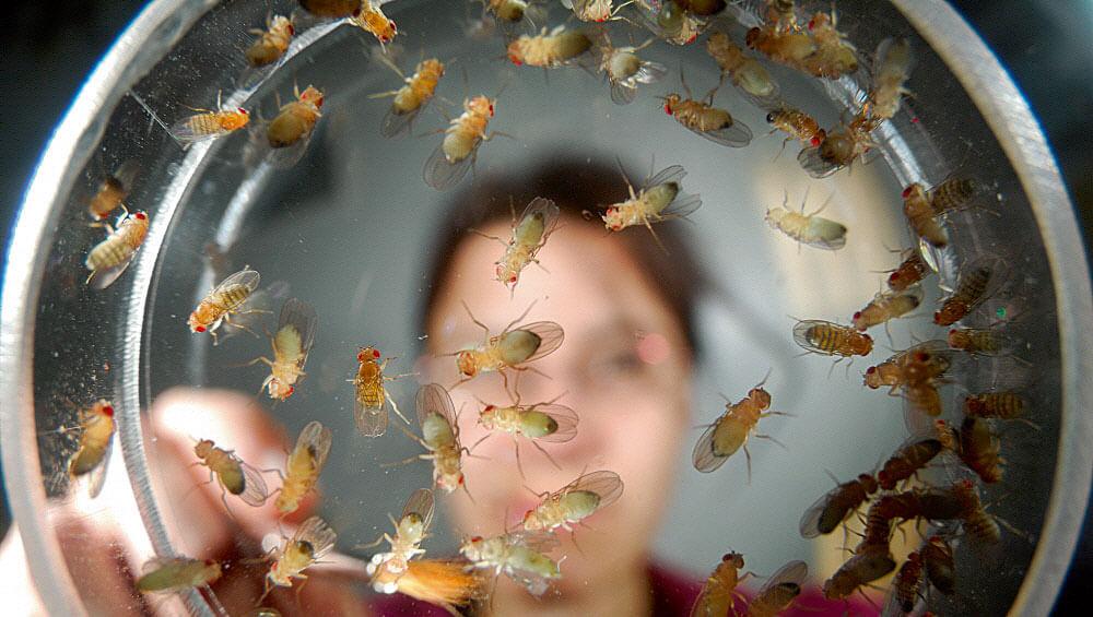 La star des labos la salamandre - Pourquoi les mouches piquent ...