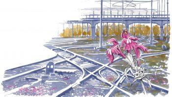 Les voies ferrées abritent une grande diversité botanique. Ici, galéopsis à feuilles étroites.