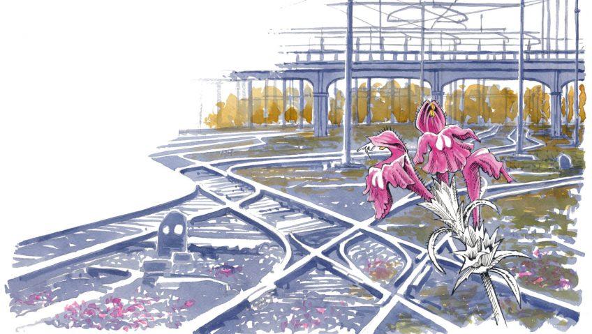 Les jardins de fers ou la flore des voies ferrées - La Salamandre