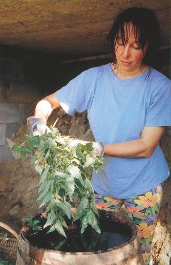 Extraits, mulch et infusions d'ortie - La Salamandre