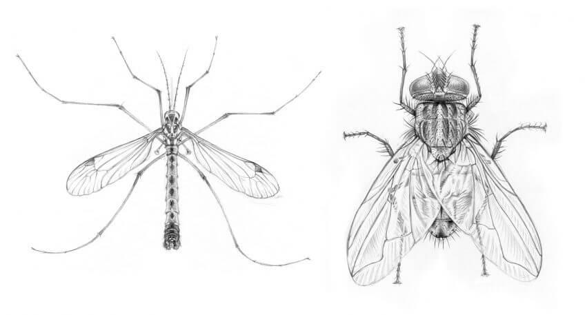 Une mouche, un poil hypersensible - La Salamandre