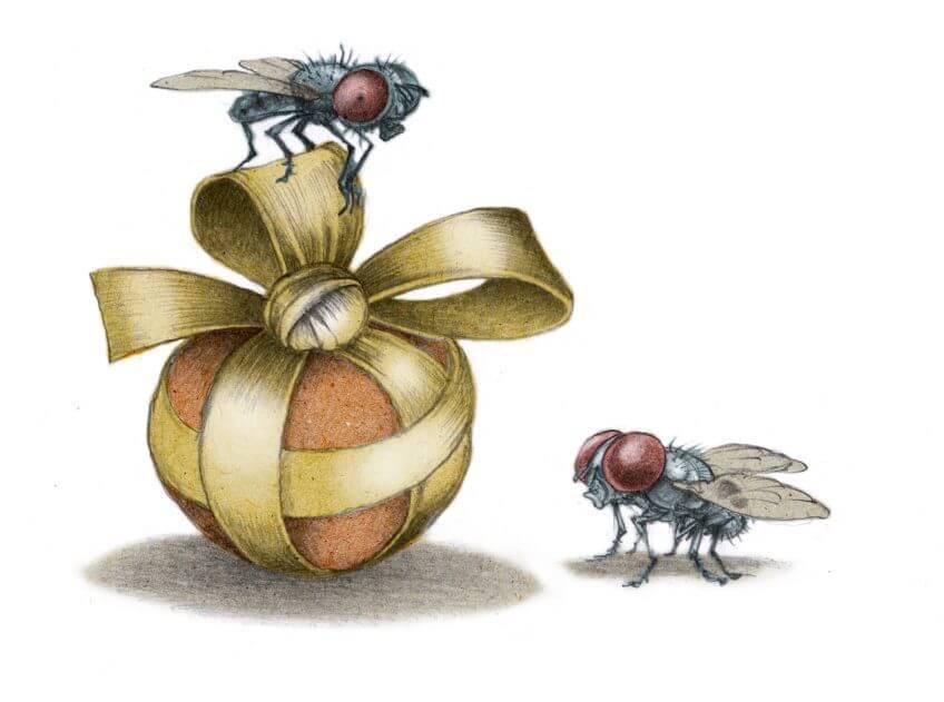 On écrase les fantasmes sur la mouche - La Salamandre