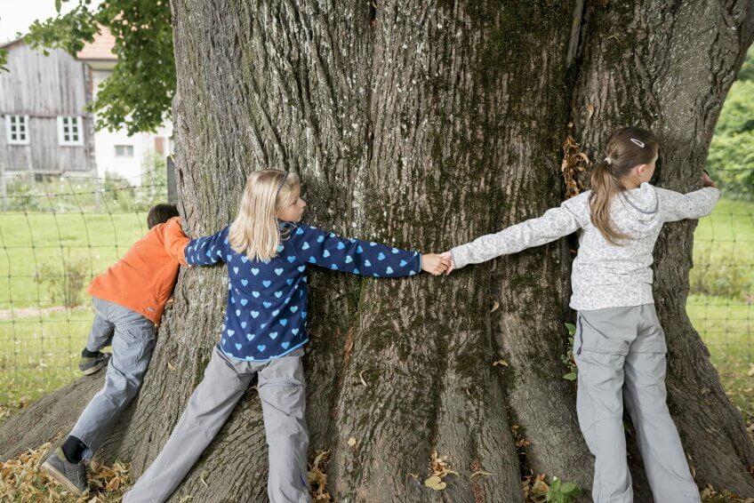Des enfants qui mesurent un arbre.