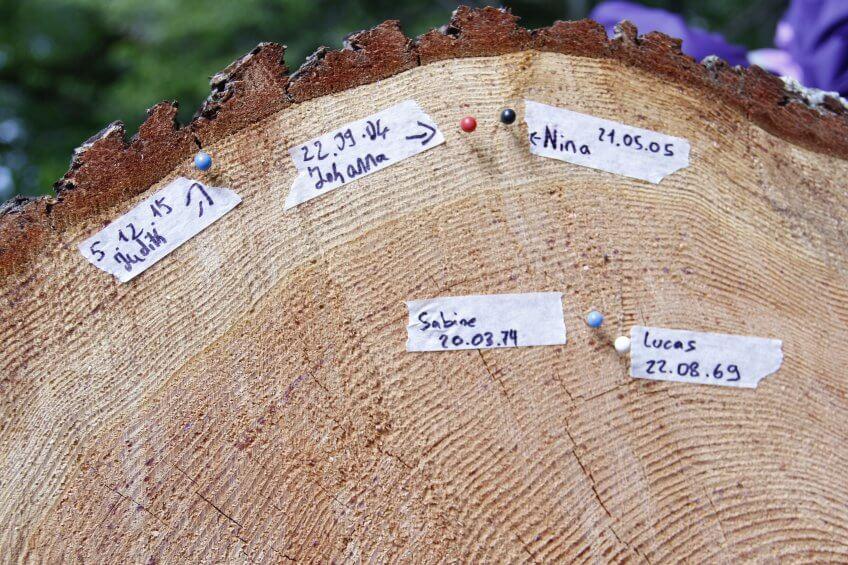 Une souche d'arbre avec des dates d'anniversaire.