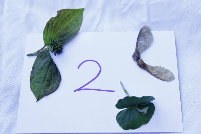 Un chiffre avec des éléments naturels.
