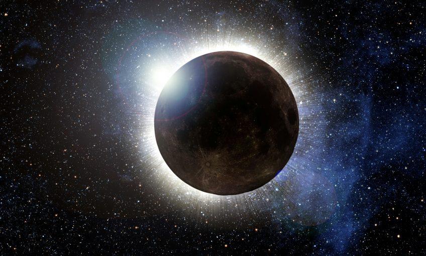 réaction éclipse solaire animaux la salamandre