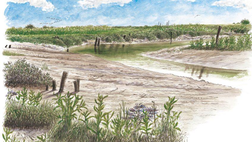 Marais à pieds nus - La Salamandre