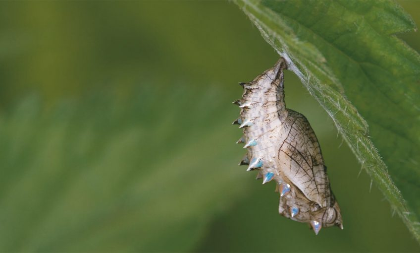 Ortie, trésor végétal - La Salamandre
