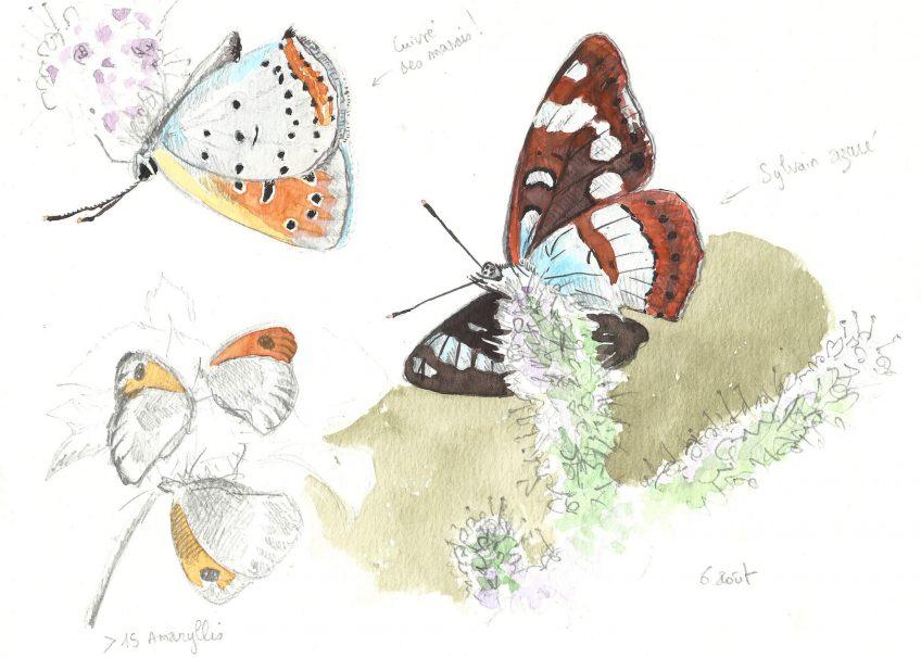Sirop de menthe pour les papillons - La Salamandre